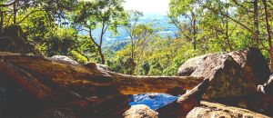Tourism Listing Partner Accommodation Mount Tamborine