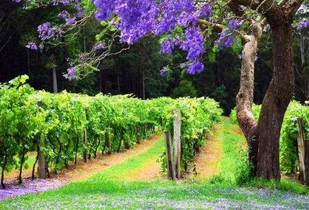 Bago Vineyards - Accommodation in Bendigo