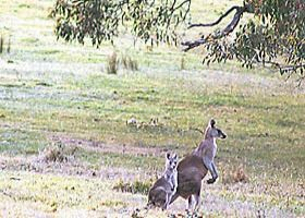 Kangaroo Ridge Retreat - Accommodation in Bendigo