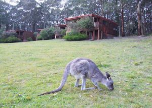 Jenolan Caves Cottages - Accommodation in Bendigo