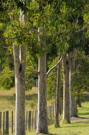 Stringybark Cottages - Accommodation in Bendigo