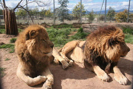 Mansfield Zoo - Accommodation in Bendigo