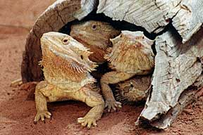 Alice Springs Reptile Centre - Accommodation in Bendigo