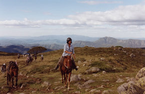 High Country Horses - Accommodation in Bendigo