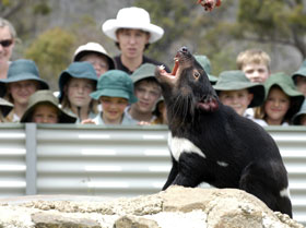 Tasmania Zoo - Accommodation in Bendigo