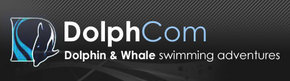 Dolphcom - Dolphin  Whale Swimming Adventures - Accommodation in Bendigo