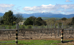 Buller View Wines - Accommodation in Bendigo