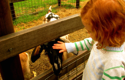 Collingwood Children's Farm - Accommodation in Bendigo