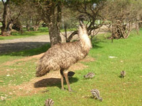 Minlaton Fauna Park - Accommodation in Bendigo