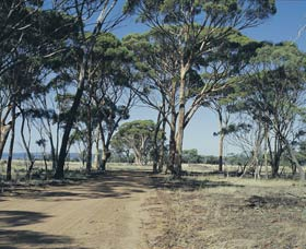 Lake Dumbleyung - Accommodation in Bendigo