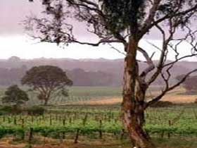 Yangarra Estate Vineyard - Accommodation in Bendigo