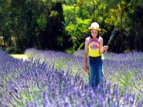 Brayfield Park Lavender Farm - Accommodation in Bendigo