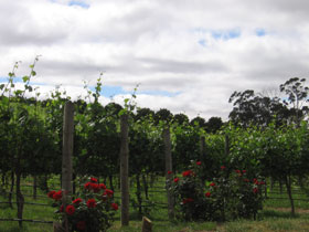Manyara Vineyard - Accommodation in Bendigo