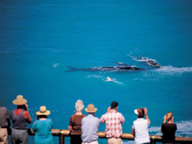 Whale Watching At Head Of Bight - Accommodation in Bendigo