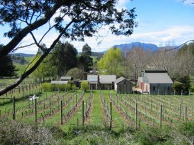 Wilmot Hills Vineyard - Accommodation in Bendigo