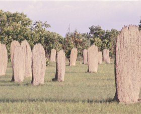 Magnetic Termite Mounds - Accommodation in Bendigo