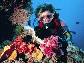 Nine Mile Reef Dive Site - Accommodation in Bendigo