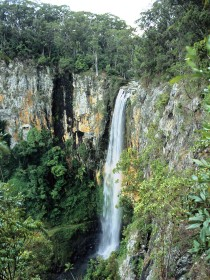 Gondwana Rainforests of Australia - Accommodation in Bendigo
