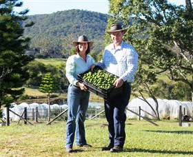 Hinterland Feijoas - Accommodation in Bendigo