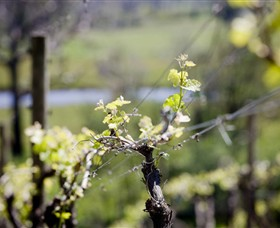 Norton Estate Wines - Accommodation in Bendigo