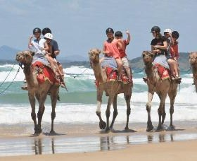 Camel Rides with Coffs Coast Camels - Accommodation in Bendigo