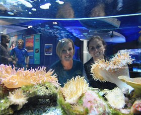 Solitary Islands Aquarium - Accommodation in Bendigo