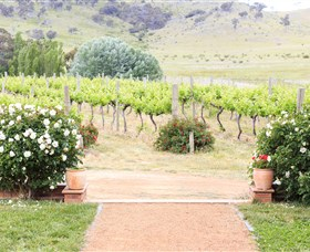 Brindabella Hills Winery - Accommodation in Bendigo