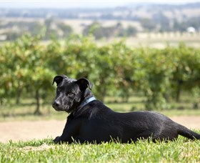 Moothi Estate Vineyard and Cellar Door - Accommodation in Bendigo