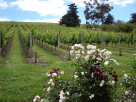 Pembroke Estate Vineyard - Accommodation in Bendigo