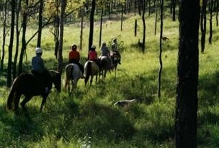 Hunter Valley Horse Riding and Adventures - Accommodation in Bendigo