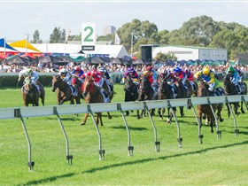Morphettville Racecourse - Accommodation in Bendigo