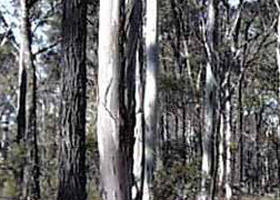 Kooyoora State Park - Accommodation in Bendigo
