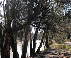 Mia Forest Drives Narrandera - Accommodation in Bendigo