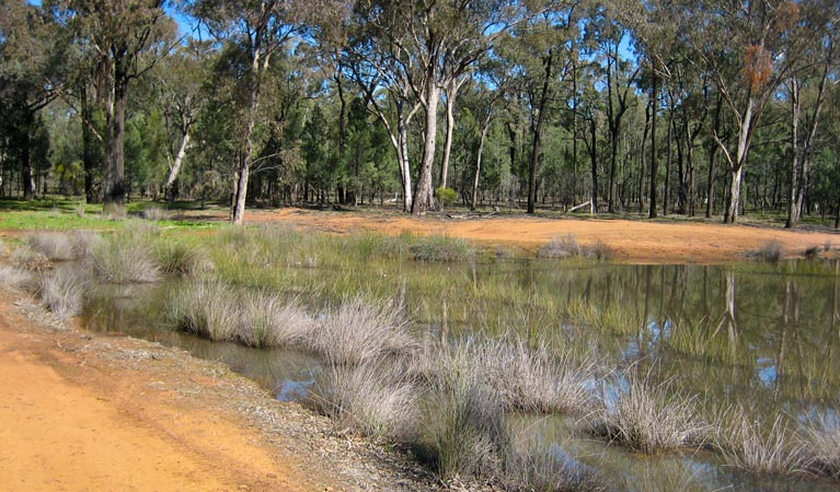 Beni State Conservation Area - Accommodation in Bendigo