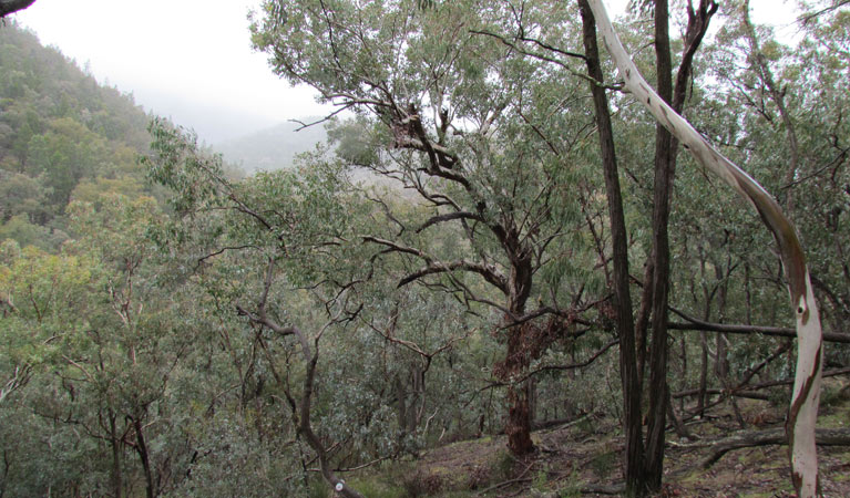 Mount Murga walking track