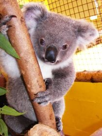 Cooberrie Park Wildlife Sanctuary - Accommodation in Bendigo