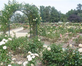 Victoria Park Rose Garden - Accommodation in Bendigo