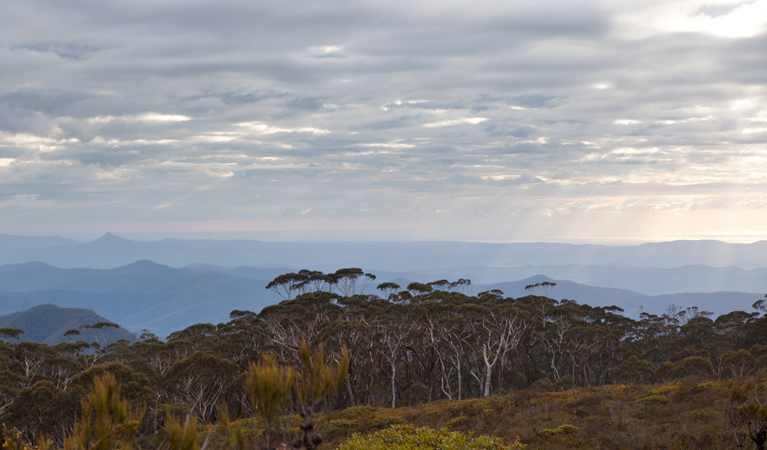 Mount Budawang trail - Accommodation in Bendigo