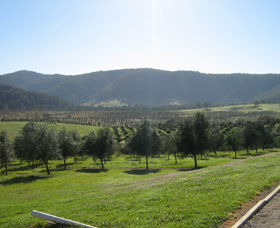 Hastings Valley Olives - Accommodation in Bendigo