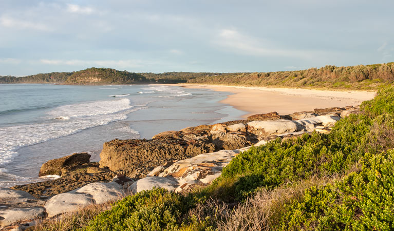 Burrawang track - Conjola Beach to Buckleys Point - Accommodation in Bendigo