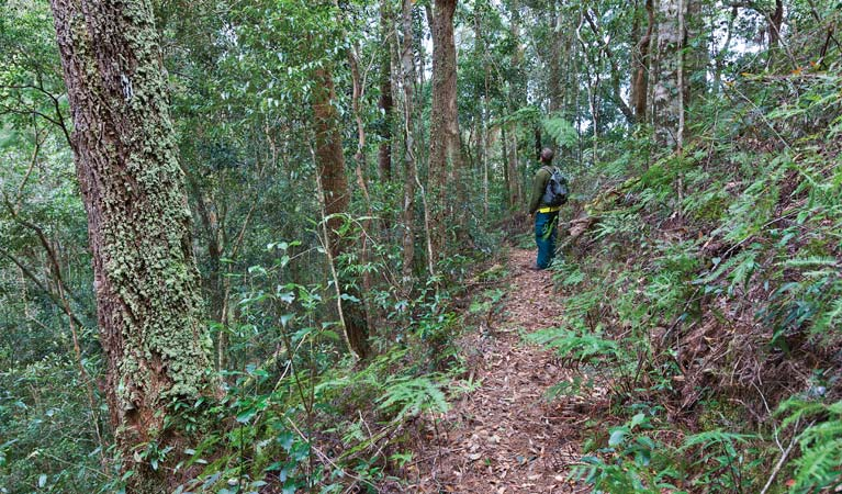 Blackbutt walking track - Accommodation in Bendigo