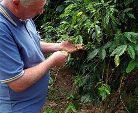 Wombah Coffee Plantation - Accommodation in Bendigo
