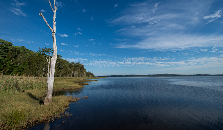 Lake Innes Nature Reserve - Accommodation in Bendigo