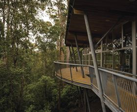 Tarkine Forest Adventures - Dismal Swamp - Accommodation in Bendigo