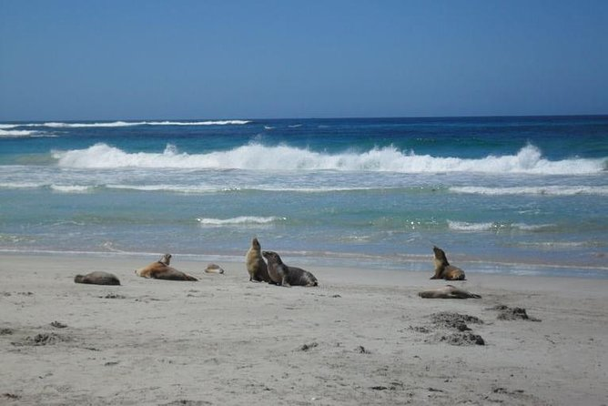 Kangaroo Island in a Day Tour from Adelaide - Accommodation in Bendigo