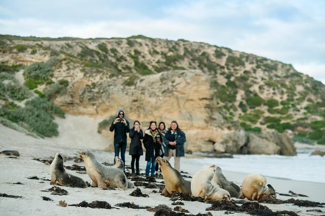 Small-Group Kangaroo Island 4WD Tour from Adelaide - Accommodation in Bendigo