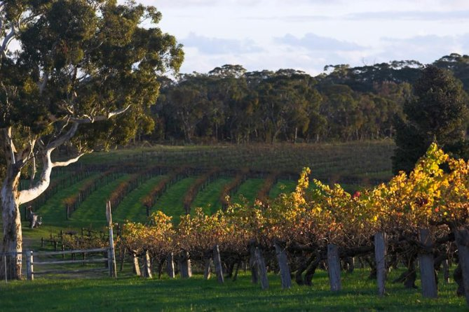 Barossa Valley with Hahndorf Tour from Adelaide - Accommodation in Bendigo