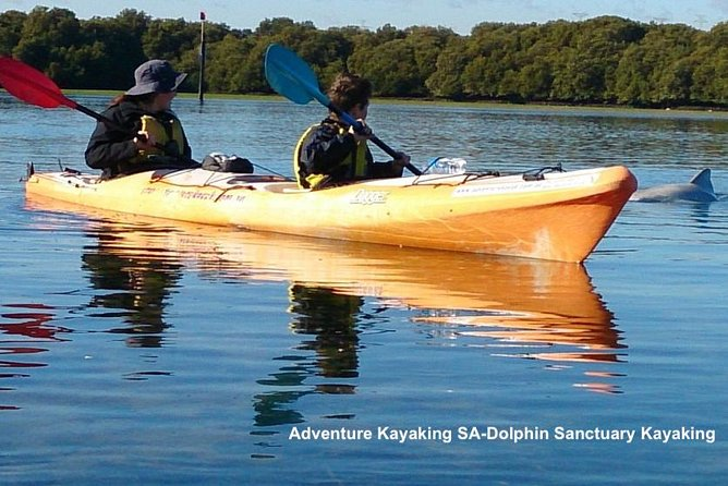 Dolphin Sanctuary and Ships Graveyard Kayak Tour - Accommodation in Bendigo