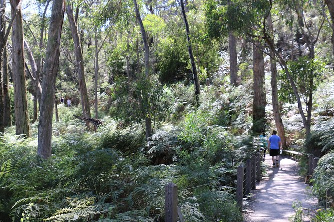 Self-Guided Waterfall Gully to Mount Lofty Hike from Adelaide - Accommodation in Bendigo