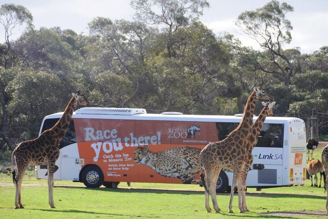 Monarto Safari Park Bus transfers from Adelaide City